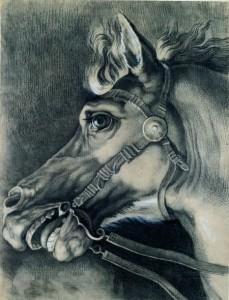 Vincenzo Camuccini (Roma 1771 - 1844), Tête de cheval, fin XVIIIe siècle - début XIXe siècle, crayon, fusain et craie blanche sur papier, 577 x 440 mm.