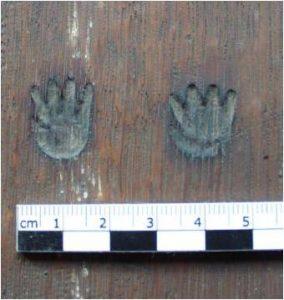 Fig 4. : Poinçon représentant des mains   apposé au revers du panneau.